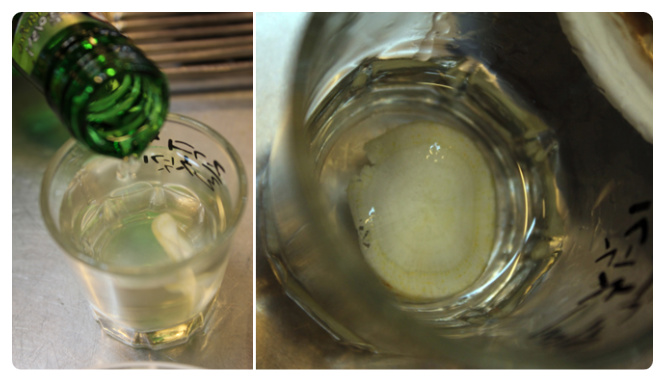 The soju glass comes with a slice of ginseng