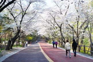 南山公园(樱花)